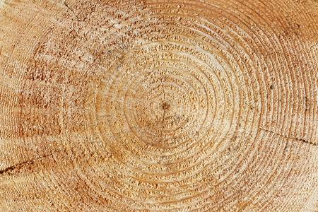 duramen: Heartwood texture background, cut log