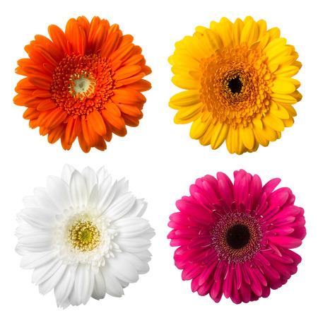 multicolored flowers Фото со стока