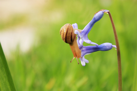sag: snail on the blue flower with grass on background in spring Stock Photo