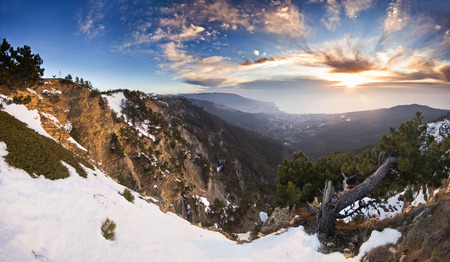 crooked: crooked pinetree at sunrise above the Black sea in mountains