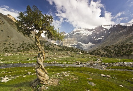spring  tajikistan: strange tree  surrounded by high snowy peaks reflects rocks
