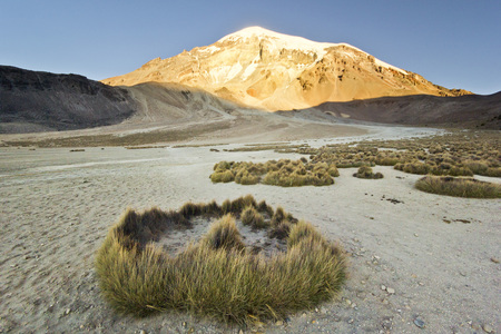 sajama: sunset at altitude 4800m above snow-covered volcano Sajama in Bolivia with bushes of grass Stock Photo