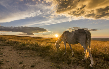 two horses on meadow at colorful sunset Banco de Imagens