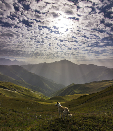 dog standing on a cliff in mountains