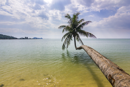 curved palm near ocean in Phangan island