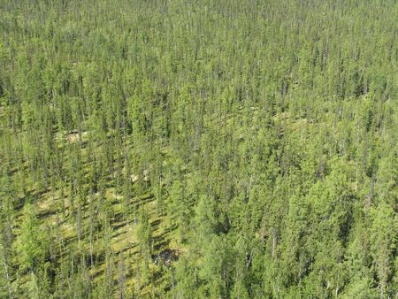 Aerial view on siberian taiga  landscape from a helicopter Stock Photo - 200529