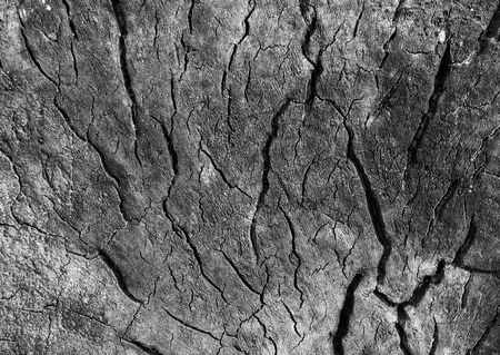 decompose: Old Wood Texture in black-and-white