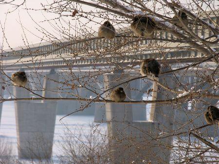 novosibirsk: Subway bridge over river Ob. Russia. Novosibirsk Stock Photo