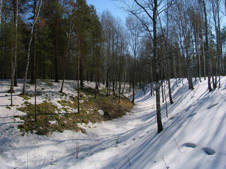 winterday: Ravine under the snow