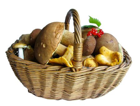 bacca: Basket full of mushrooms. Isolated image