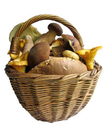 fungous: Basket full of mushrooms. Isolated image