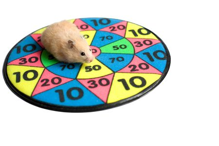 Hamster on the dartboard. Isolated image photo