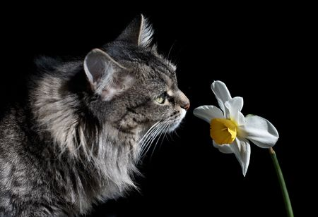 florescence: Cat snuffing the flower