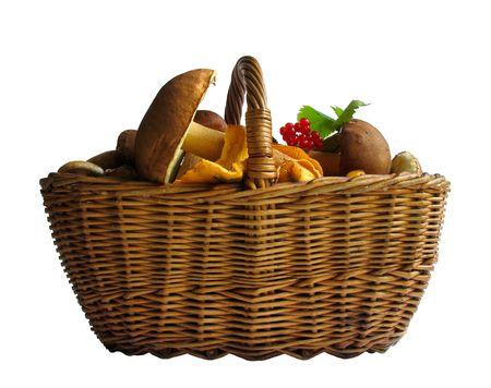 Basket full of mushrooms. Isolated image photo