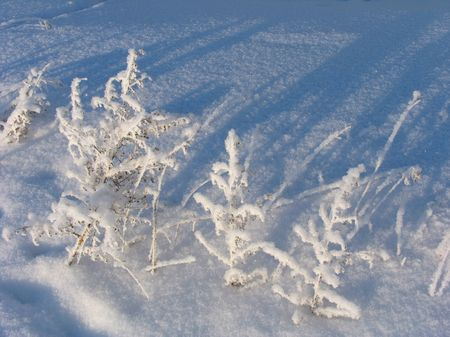 snowscene: Withered grass on the snow Stock Photo