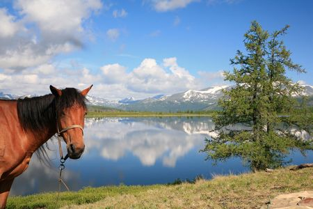 Horse and the view on mountain lake photo