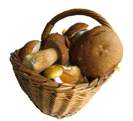 Basket full of mushrooms. Isolated image
