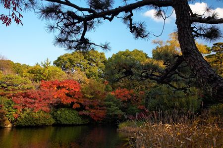 summer japanese landscape with pond and trees Stock Photo - 3268171