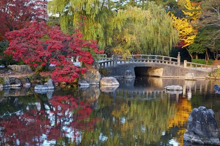japanese maple tree: summer japanese landscape with pond and trees