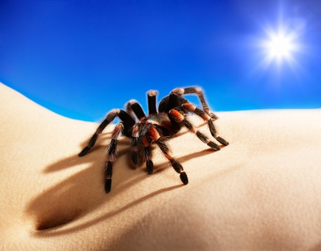 bodyscape: bodyscape with spider under blue sky and sun