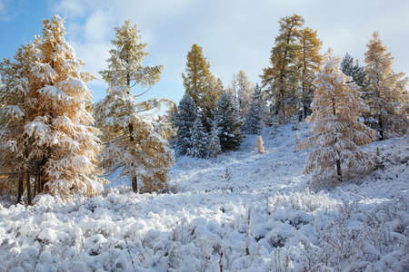 View on Altai mountines and forest under snow Stock Photo - 8400469