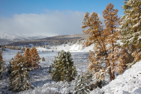 View on Altai mountines and forest under snow photo