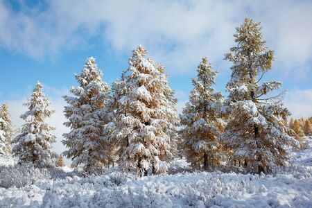 View on Altai mountines and forest under snow Stock Photo - 8400465