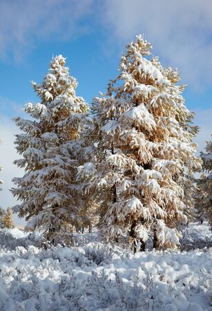 View on Altai mountines and forest under snow Stock Photo - 8400463