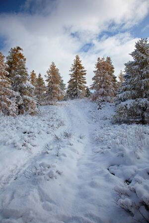 View on Altai mountines and forest under snow Stock Photo - 8400460