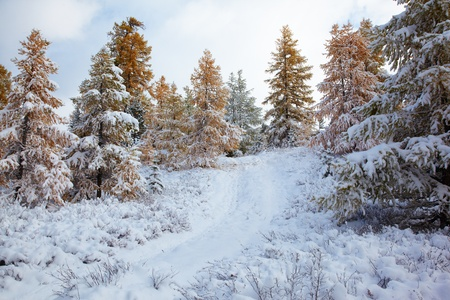 View on Altai mountines and forest under snow Stock Photo - 8400468