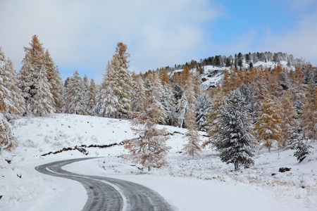 View on Altai mountines and forest under snow Stock Photo - 8400464