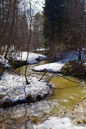 Small river in siberian forest at Spring time photo