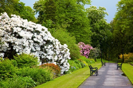 northern ireland: Alley in Belfast Botanic Gardens, Northern Ireland