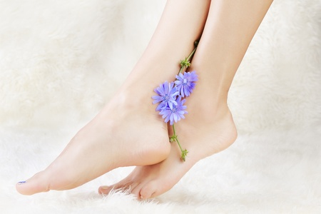 young girl feet: body part shot of beautiful healthy young womans legs on white fur with blue chicory flower Stock Photo