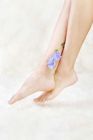 naildesign: body part shot of beautiful healthy young womans legs on white fur with blue chicory flower Stock Photo