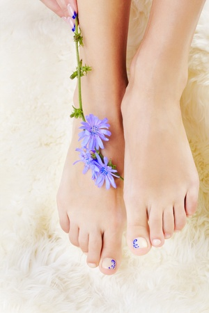 body part shot of beautiful healthy young womans legs on white fur with blue chicory flower photo