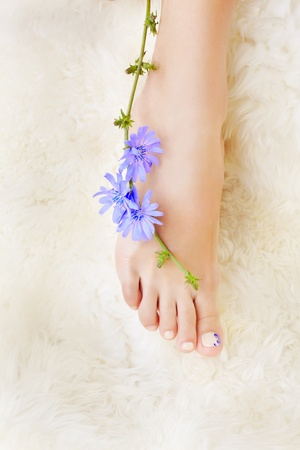 tiptoe: body part shot of beautiful healthy young womans legs on white fur with blue chicory flower Stock Photo