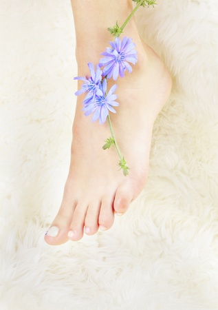 body part shot of beautiful healthy young woman's legs on white fur with blue chicory flower photo