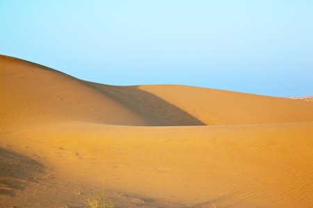 Sand dunes of desert Thar  in Rajasthan, India photo