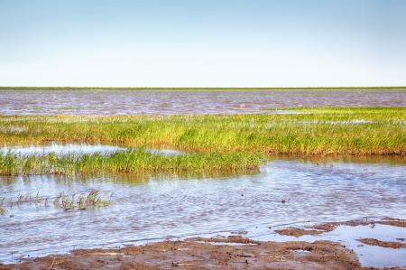 carex: Peat banks of river Kolyma near Settlement Pokhodsk in Sakha Yakutia