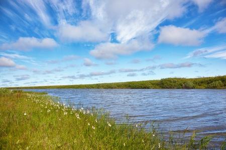 carex: Meadow near channel of river Kolyma in Sakha Yakutia Stock Photo