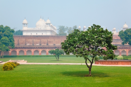 agra: Green grass lawn and oleander tree in Cortyard of Red Fort in Agra, Uttar Pradesh, India Stock Photo