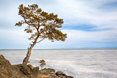 Lonely tree near Baikal lake in Siberia at winter photo