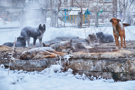 outcast: Homeless dogs in winter time heating on sanitaryware well