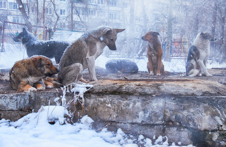 Homeless dogs in winter time heating on sanitaryware well photo