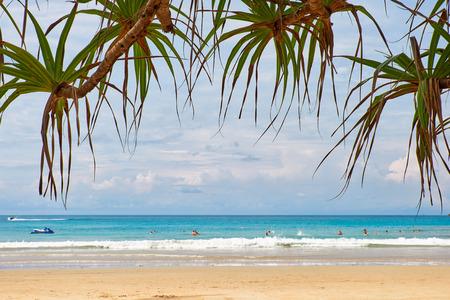 screwpine: Screwpine - Pandanus over Kata beach on Phuket island in Thailand Stock Photo