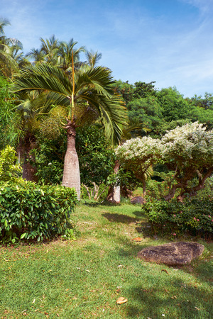tries: Tries in tropical garden on Phuket island in Thailand