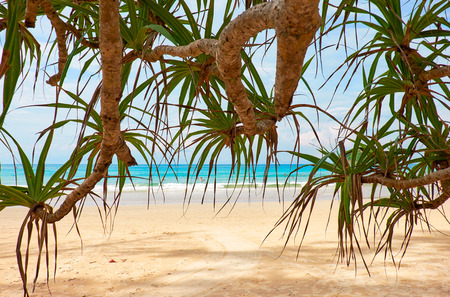 kata: Screwpine - Pandanus over Kata beach on Phuket island in Thailand Stock Photo