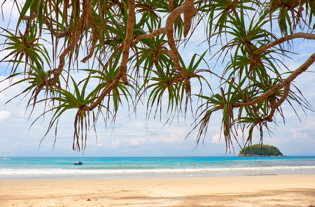 Screwpine - Pandanus over Kata beach on Phuket island in Thailand Stock Photo