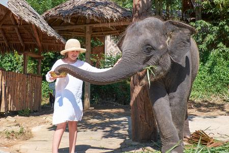 thai elephant: Teen girl feeding elephant calf on Phuket island in Thailand Stock Photo